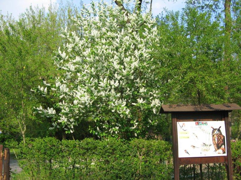 Giardino delle capinere for Giardino wow ferrara